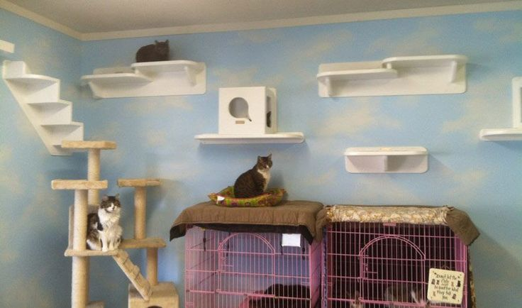 Want to do something like this for the cats for more play space (the shelves, not the cages)