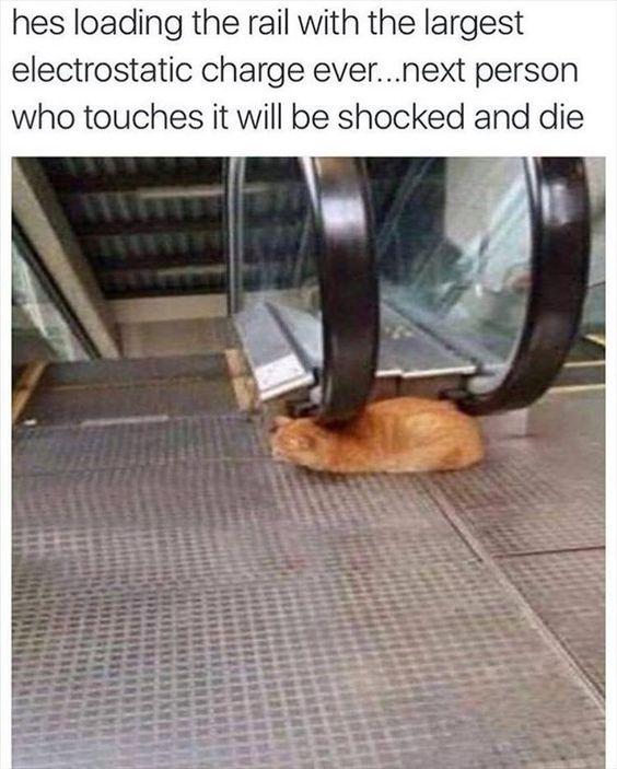 Funny cat memes #Funny