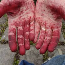 My red hands