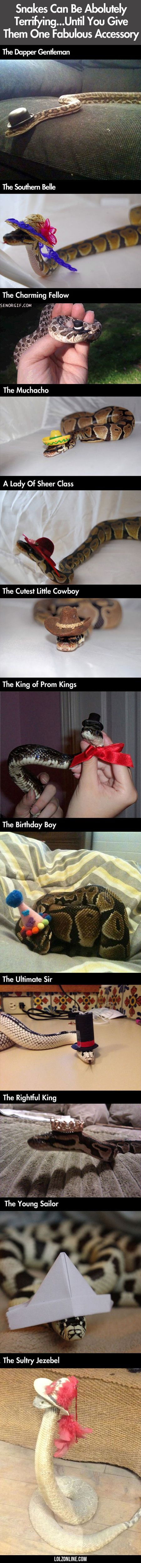 Snakes Can Be Asolutely Terrifying#funny #lol #lolzonline