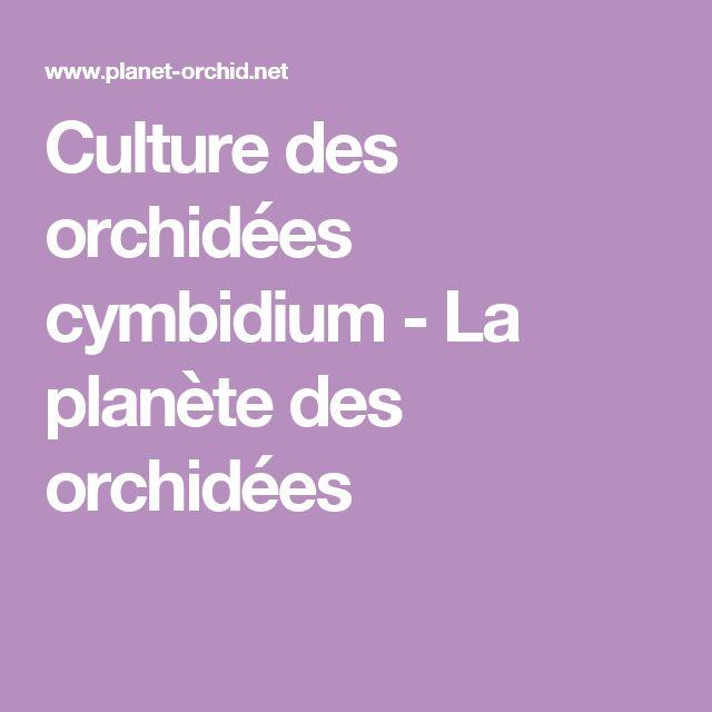 Culture des orchidées cymbidium - La planète des orchidées