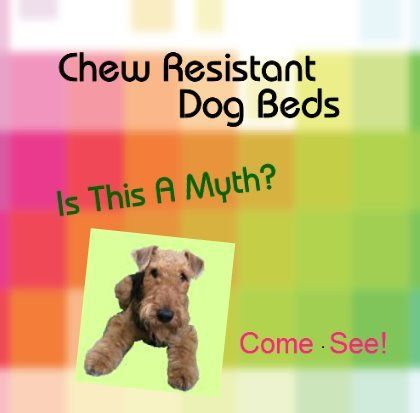 is your dog a chewer need help selecting chew proof dog beds read our