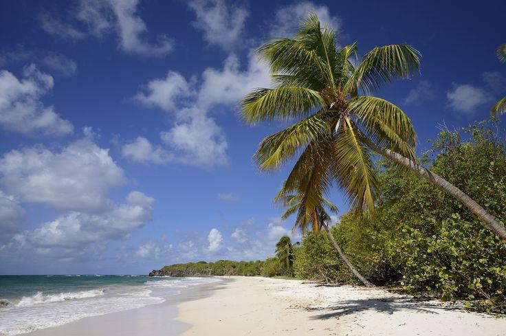 La #plage de Grande Terre.  #Martinique #Antilles #France