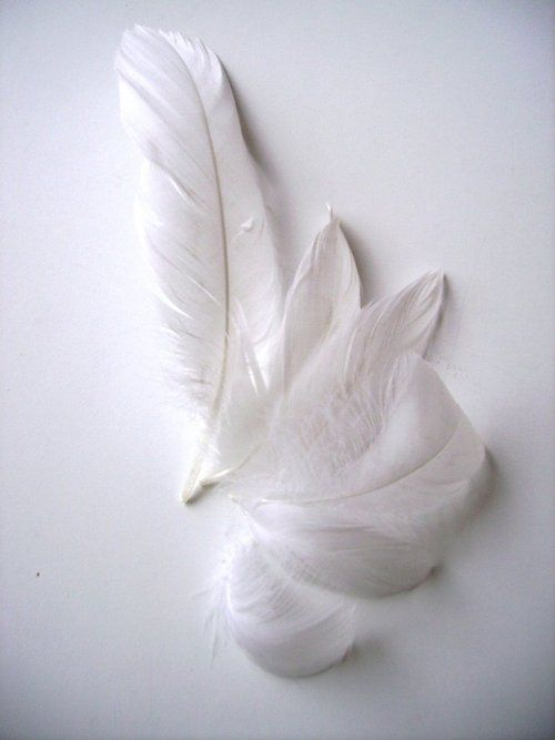 White feathers...