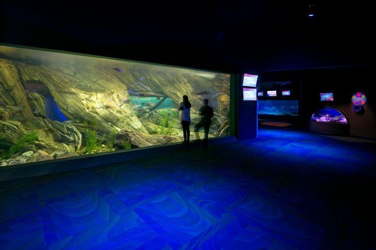 Ripley's Aquarium of Canada #lighting #design #LED