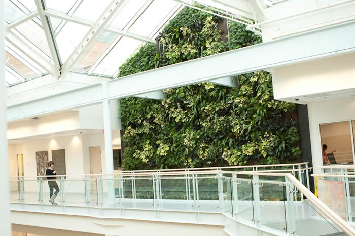 Living Wall - The Atrium