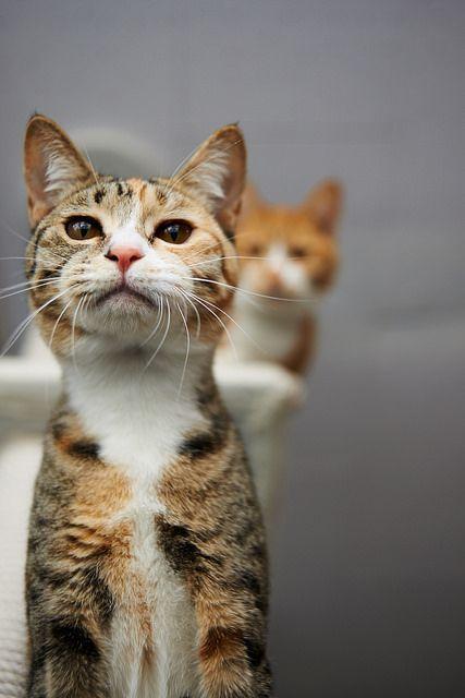 #Cats_Hằng Hằng