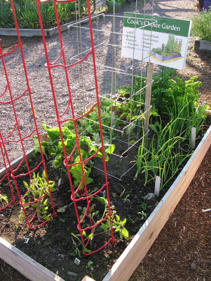 110 best images about garden ideas on pinterest for Veggie patch ideas