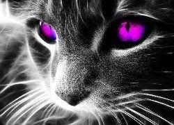 Kot, Różowe, Oczy