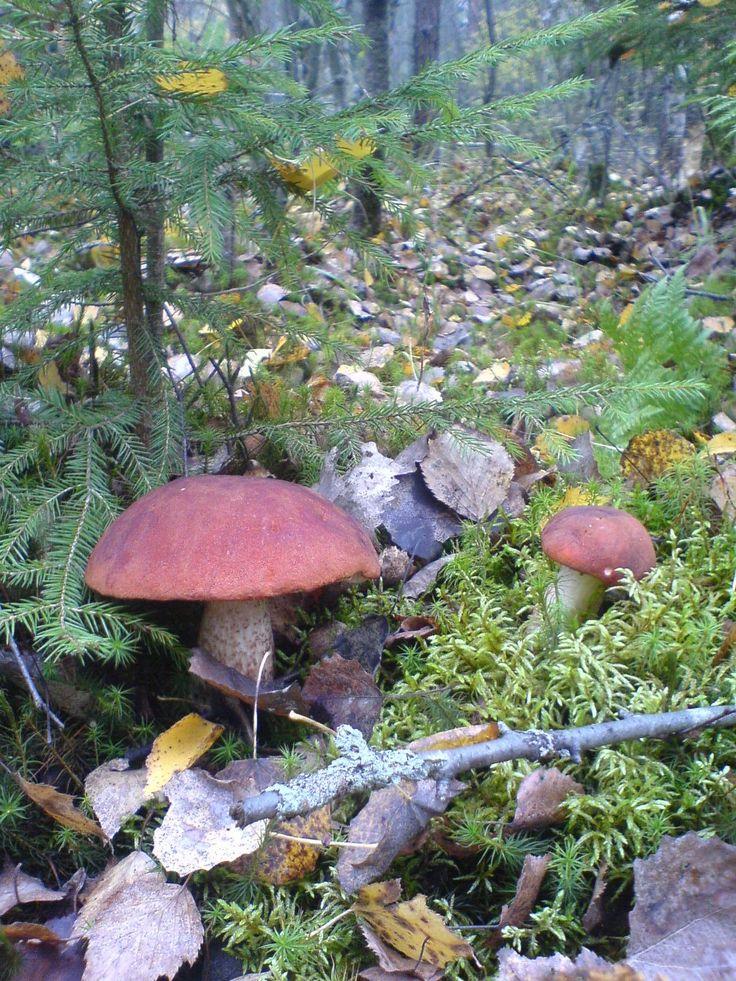 Начало осени в лесу.