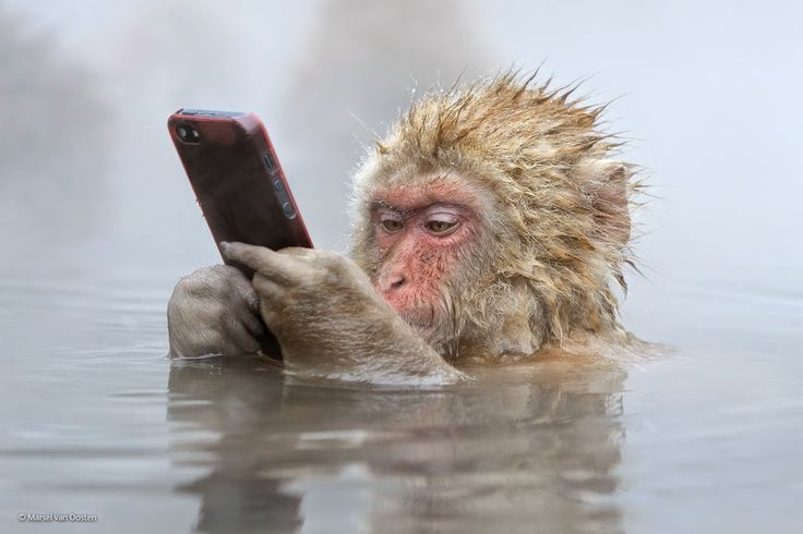 Finalists Of The 2014 Wildlife Photographer Of The Year Competition Facebook Update by Marsel van Oosten photography monkey
