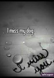 I miss you so much to all my dogs & our dogs that've crossed the Rainbow Bridge.