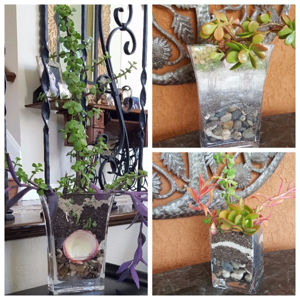 #Succulents in #glass #vases By Adesignthatworks