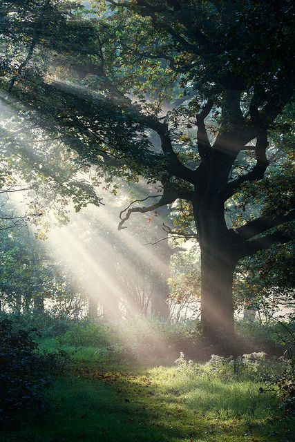 ~~Felbrigg Hall | crepuscular rays light a majestic tree | by Matthew Dartford~~