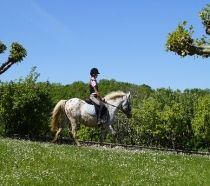 Local horse riding stables