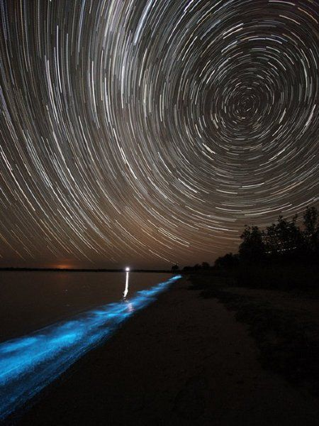 Bioluminescent Seas Under a Starry Night. Saw this when we were camping in Concepcion Bay, Baja Cali, Mexico. So Cool!