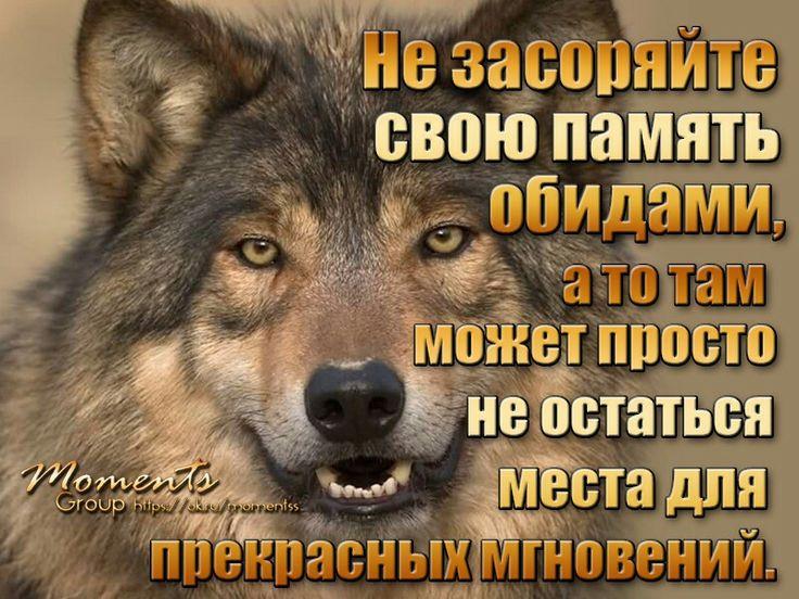 высказывания волков фото и картинки