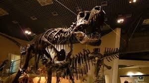 Image result for museo ciencias naturales madrid