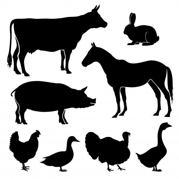 Ferme Animal Silhouette Farm Yard Motion Graphics Tutorial