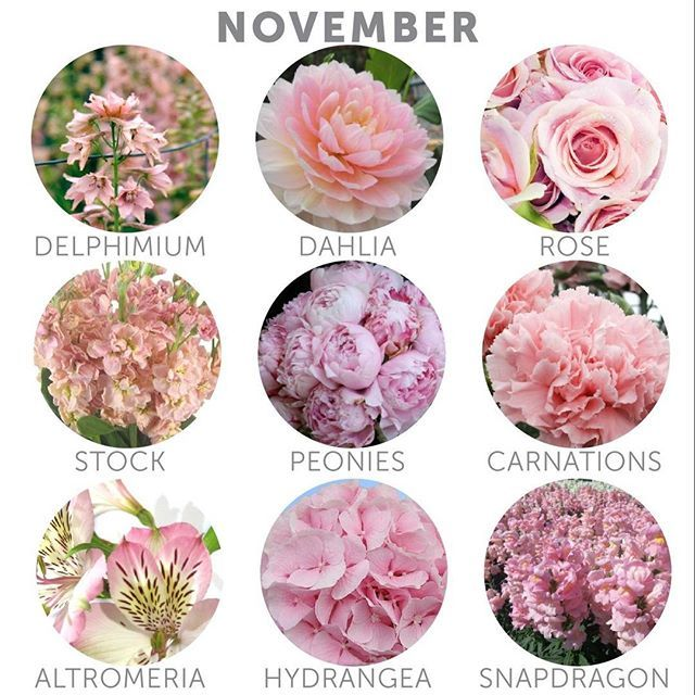 Bridal Flowers In November : Best november wedding colors ideas only on