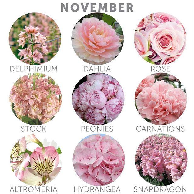 In season flowers...November