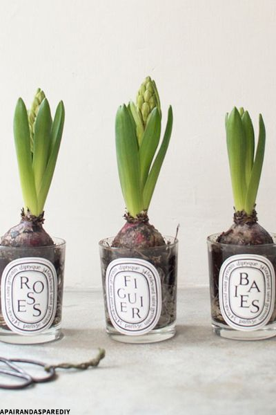 Diptyque candle jar re uses