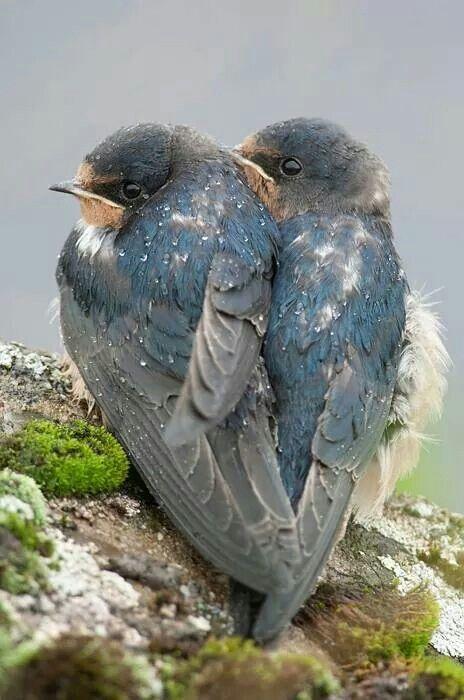 Awww.... Like my sweetheart Barry and me ~  sweet little love birds. Too precious!!