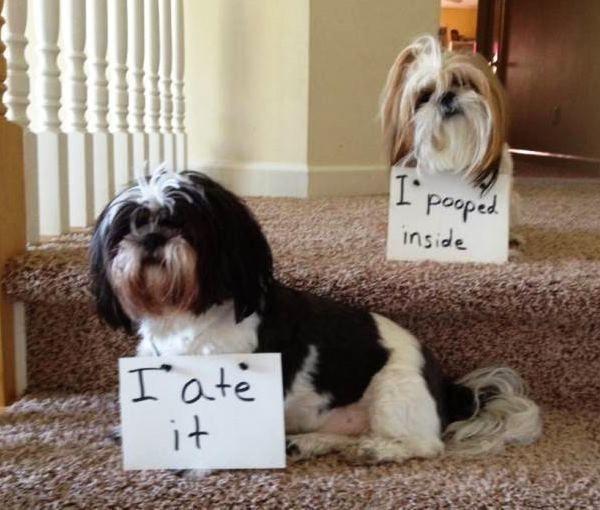 Dog Shaming Pictures Poop