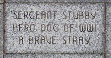the most decorated war dog of World War I and the only dog to be promoted to sergeant through combat.