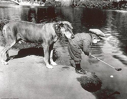 Vintage Black and White Photography | ... Dog Golfing Poster - Black & White Vintage 1920s Classic, Golf Humor