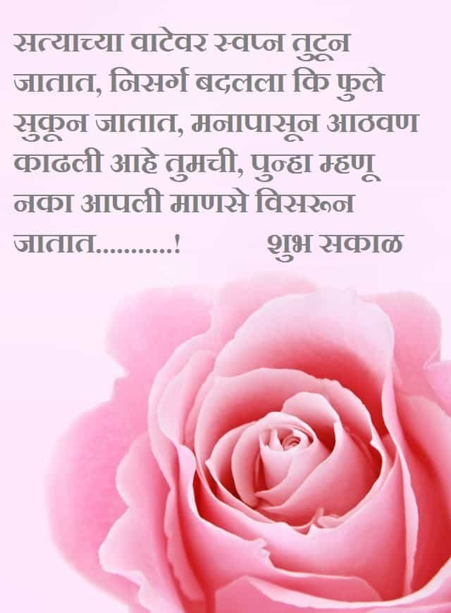 Pink Rose With Sweetest Good Morning Msg In Marathi In 2020 Everything Is Possible Rose Solid Perfume