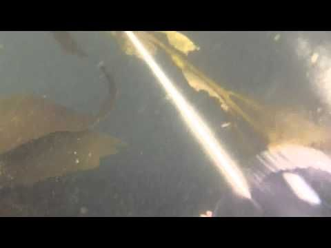 The Best Diving Videos Ideas On Pinterest Scubas What Is - An alien world lurks beneath in this creepy cave diving video