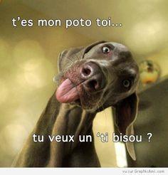 Une image à poster sur le profil de ton ami sur Facebook pour lui dire qu'il est ton poteau ! Et puis ce chien, il est trop craquant !