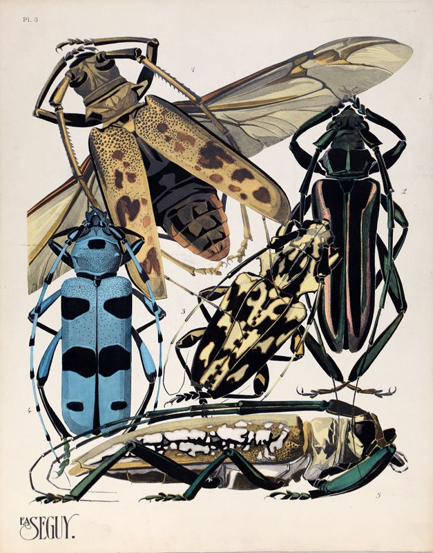 Eugene Alain Seguy, Plate 3 - Longhorn Beetles, Lithograph