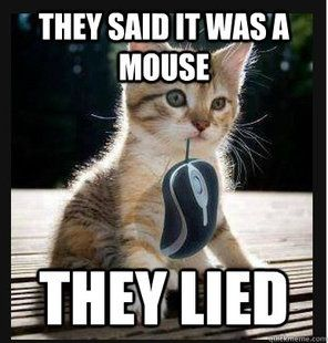"Cute kitten meme with ""mouse"" Cat Memes Pinterest"