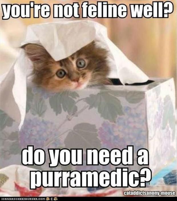purramedic. If you are not feline well, you need a nurse cat that fits into your tissue box. You will soon feel better.