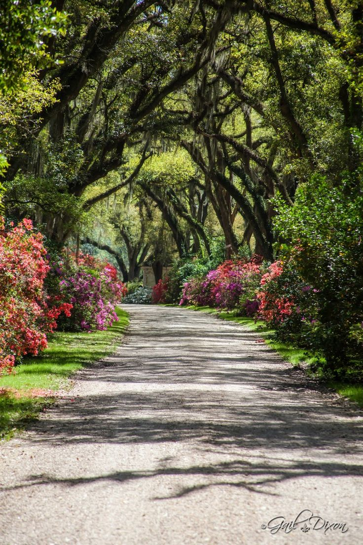 24 Best Images About Favorite Louisiana Mississippi Places