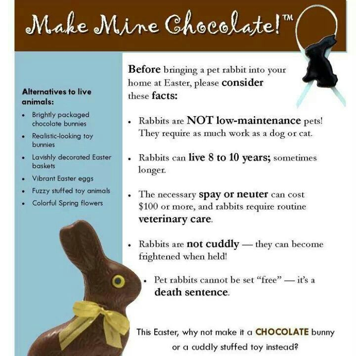 552 best easter images on pinterest holidays easter ideas and make mine chocolate this easter remember that rabbits are not toys theyre long term high maintenance pets that deserve lots of love and care negle Images