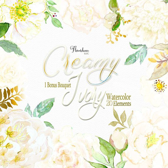 Fiori Bianchi Per Te Accordi.Cream Peony Clipart Cream Floral Watercolor Clipart Peony Matrimonio