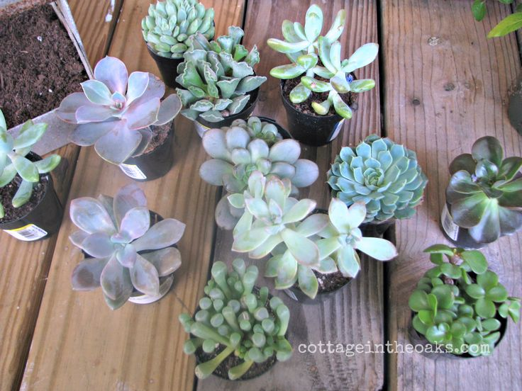 1000 Images About Flowers Succulents For The Big Day On