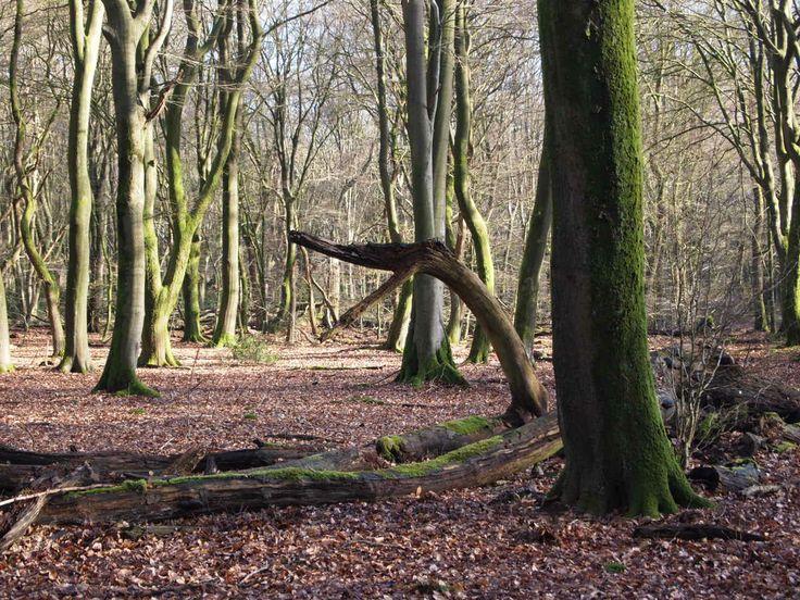Bos bij Putten tijdens de herfst