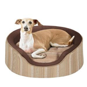 62 best italian greyhound images on pinterest