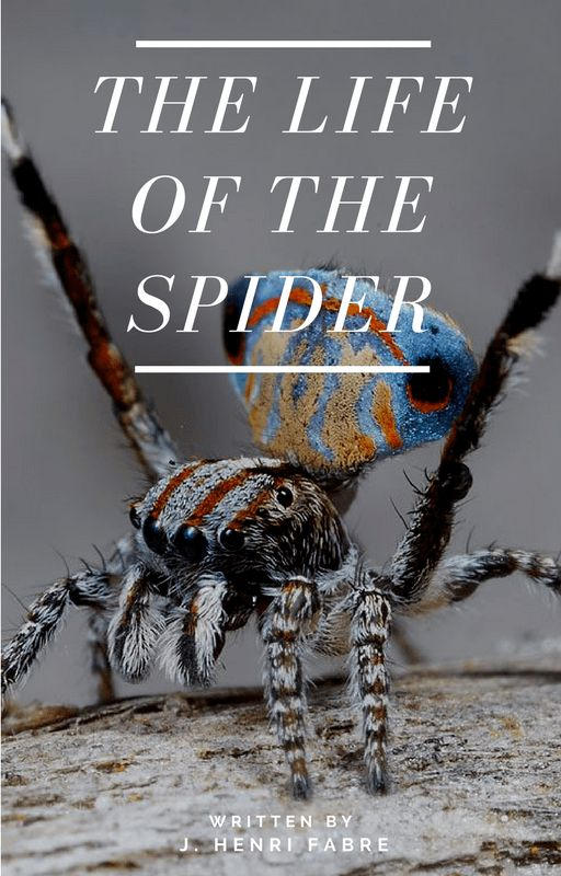 The spider has a bad name–to most of us, it represents an odious, noxious arthropod, that everyone hastens to crush under foot. Against the backdrop of that summary judgment, the observer set…