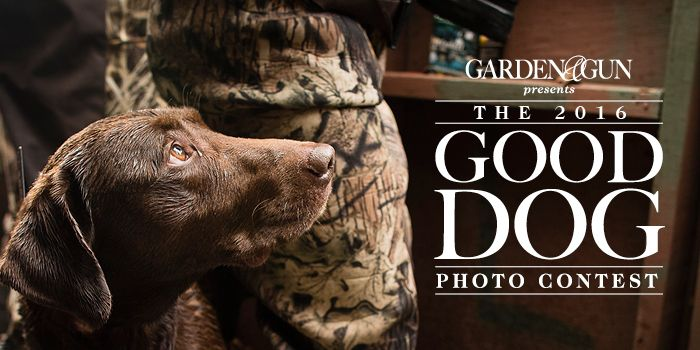 Show us your good dog and vote for your favorites