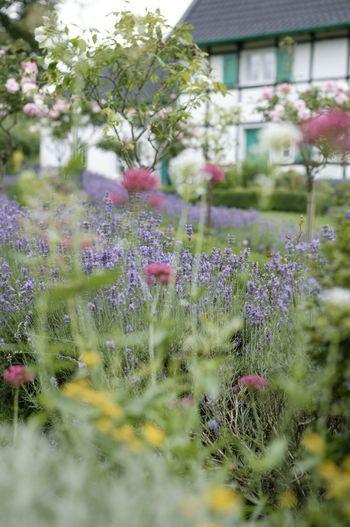 Rosenstämmchen säumen den Weg. Farbenvielfalt ist Programm in natürlichen Gärten.