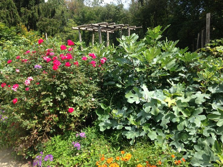 How to build a mini food forest based around a fruit tree and it's companions like berry bushes, pollinator (edible) flowers, etc.