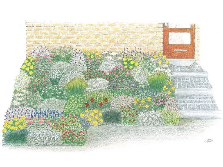 Sonniger Vorgarten Niedrige Pflanzen Für Sonnig-trockene