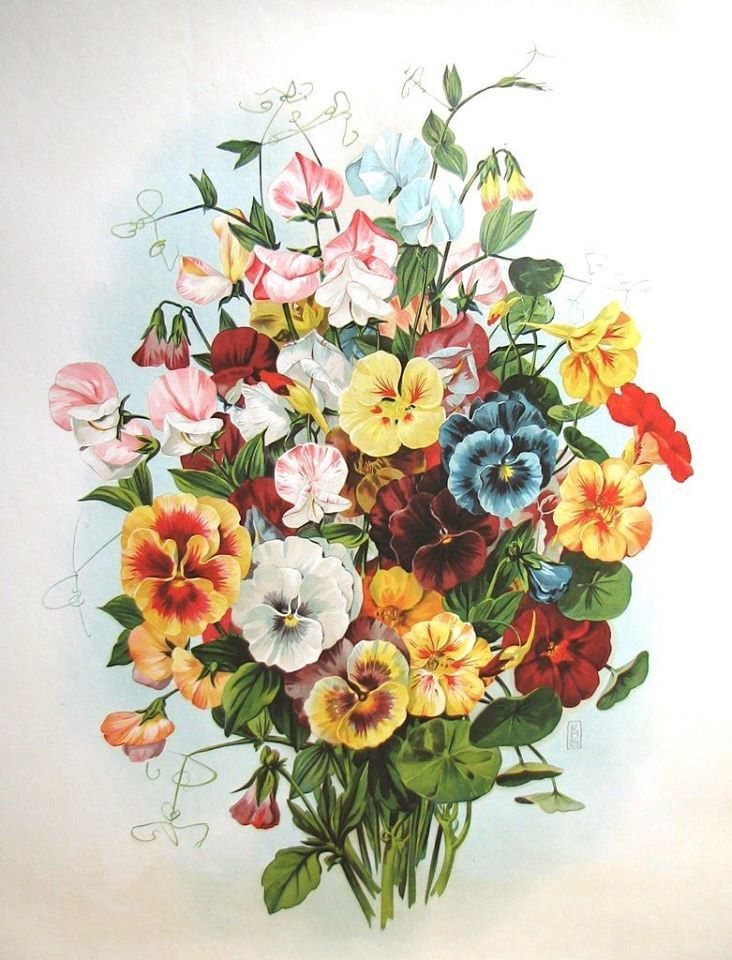 Pin By Andrea Vega Sales On Ilustracje Botaniczne In 2020 Pansies Flowers Flower Painting Vintage Flowers