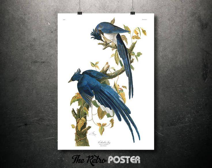 Columbia Jay - 1837 Birds of America by John James Audubon - Nature Prints, Bird Art, Bird Print, Botanical Poster Vintage, Kitchen by TheRetroPoster on Etsy