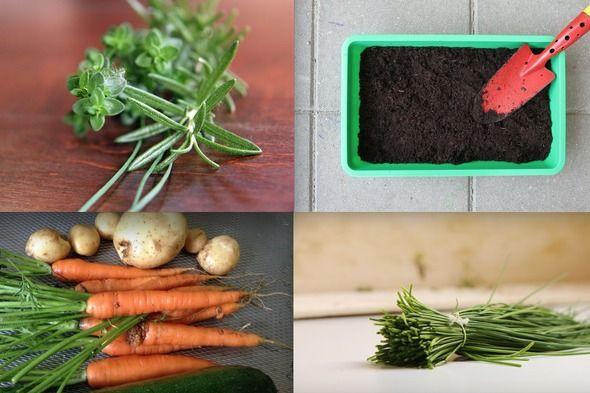 Du trenger slett ikke være bonde eller ha hage for å dyrke egne grønnsaker. En potte i vinduskarmen er faktisk nok.